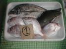 【100円スタート】和歌山産 魚セット ①
