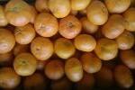 ★高級柑橘が1円スタート!甘平・かんぺい(小さめ)7.5kg①
